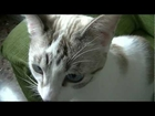 My rescued cat kisses to the cam
