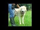 Their Plight is Our Fight East Galway Animal Rescue (EGAR)
