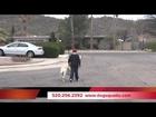 Dog Squad U - Tucsons Best Dog Training