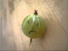 Gary The Gooseberry - My entire family was slaughtered by humans