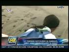 UNTV News: 167 Pawikan hatchlings sa Zambales, sabay-sabay pinakawalan sa dagat (JAN212013)