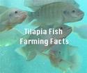 Tilapia Farming At Home